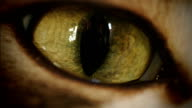 Cat Eye Super Macro Transition Zoom-In video