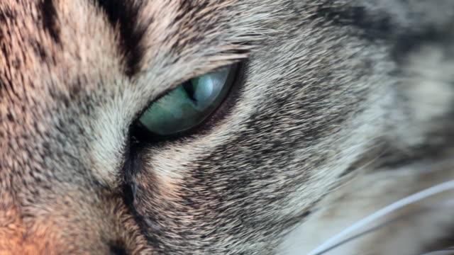 Cat eye video