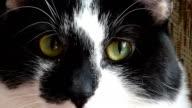 Cat Eyes video