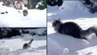 MONTAGE: Cat having fun in snowy winter video
