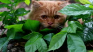 Cat hunting video