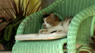 cat in a chair, front porch video