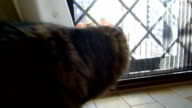 Cat In Ambush Behind The Door video