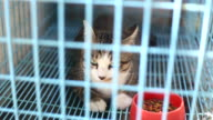 Cat in animal cage video
