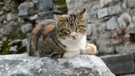 cat in Ephesus video