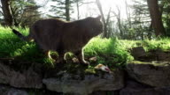 Cat in the forest on a sunny day video