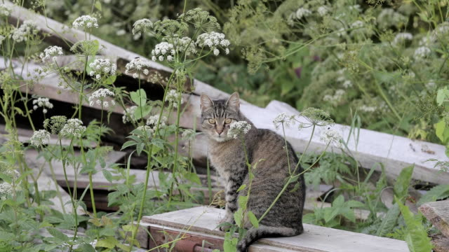 Cat in the grass outdoor video