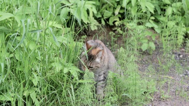 Cat in the grass outdoors video
