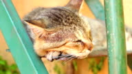Cat is sleeping video