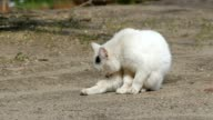 cat licks clean outdoors white slow motion video video