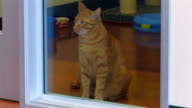Cat Looking Through Glass video