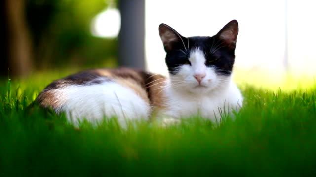 Cat lying in grass video