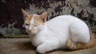 Cat lying on cement floor video