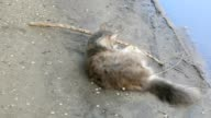 cat lying on ground, playing with a stick slow motion video video