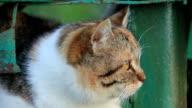 Cat muzzle video