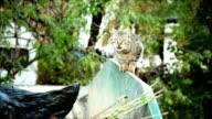 Cat on garbage video