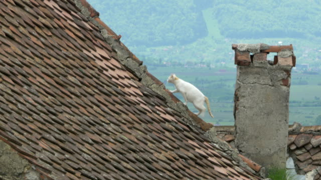 Cat on Old Tiles Roof video