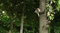 HD SLOW-MOTION: Cat On The Tree video
