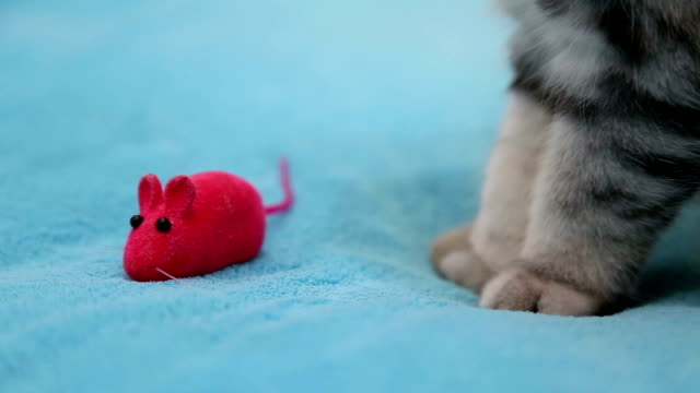 Cat playing with toy mouse video