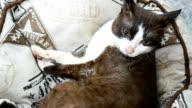 cat relaxing on mattress video