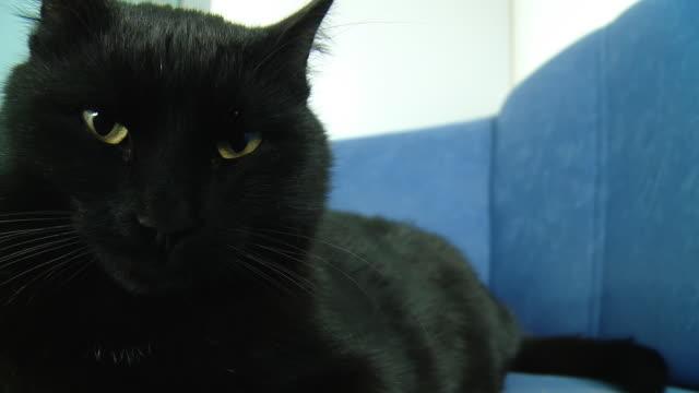 HD: Cat Resting On A Sofa video