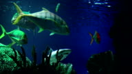 Cat sharks in the Blue Water video