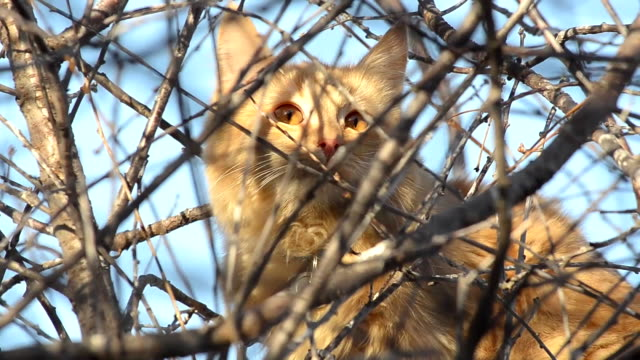 Cat sitting on a tree among the branches video