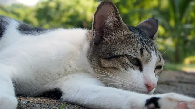Cat sleep video