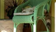 cat sleeping in a chair,  front porch video