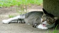 Cat Sleeping video