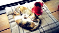 Cat sleeping with hot coffee cup video