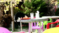 Cat stealing food video