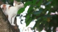 Cat Stuck in Tree, Pet Rescue video