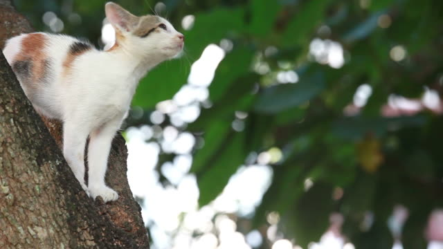 Cat Stuck in Tree, Pet Rescue video