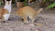 Cat taking a dump, cats toilet video