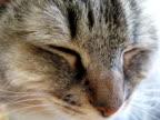 Cat (PAL) video