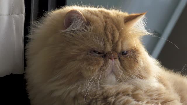 4K: Cat video