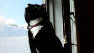 Cat Watching Birds Though Window video