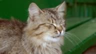 cat yawns funny slow motion video video