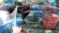 catch shrimp fishing net video