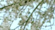 Caterpillar colony. Background video