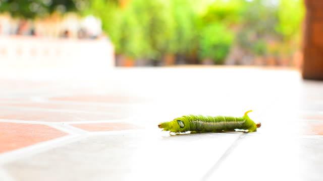 Caterpillar Crawling on the Floor video