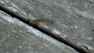 Caterpillar crawls through the gap video