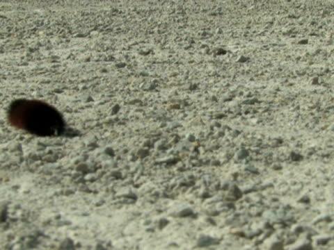 Caterpillar on Gravel video