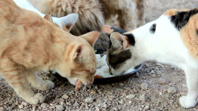 cats and dog eating together. video