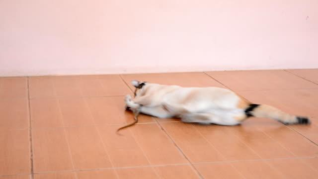 Cats kill snakes video