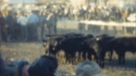 Cattle Run Event (Archival 1950s) video
