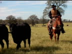 Caucasian Cowboy Rides Brown Horse on Texas Ranch video