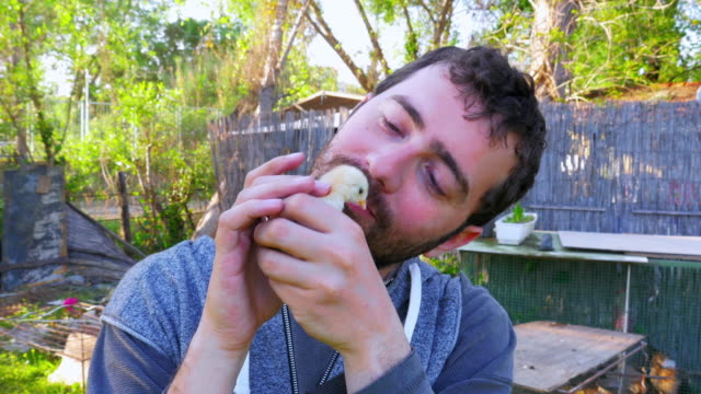 Caucasian man hold baby chick, kissing holding chicken video