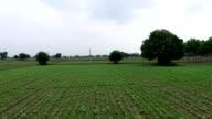 Cauliflower crop field elevated view video